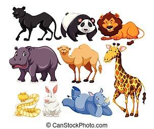 selvatico, miscelare, vita, animale