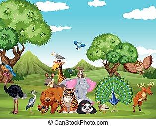 selvatico, molti, animali, scena, foresta