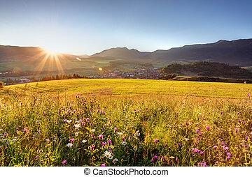 selvatico, montagna, fiore, prato, alba