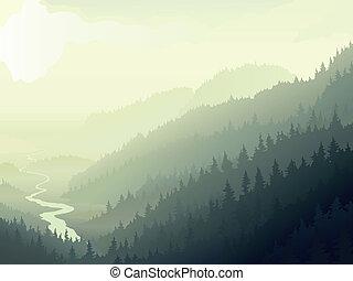 selvatico, nebbioso, wood., conifero