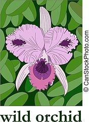 selvatico, orchidea