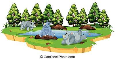 selvatico, rinoceronte, in, natura