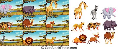 selvatico, set, animale, natura