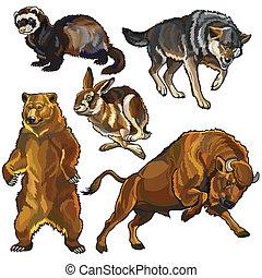 selvatico, set, animali, europeo