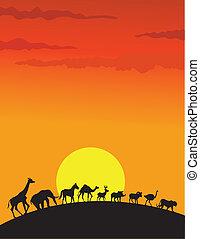 selvatico, silhouette, animale