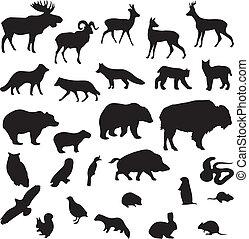 selvatico, silhouette, set, animali, vettore