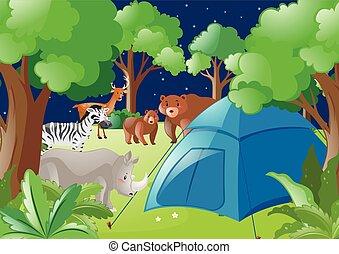 selvatico, tenda, animali, scena, foresta