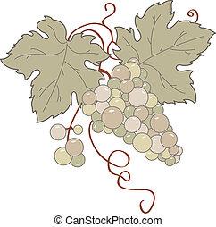 selvatico, uva