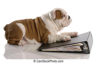 semaine, école, vieux, bouledogue, pose, -, chien, relieur, papier, neuf, anglaise, chiot, rempli