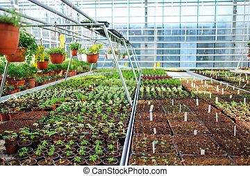 semenáci, do, jeden, botanický, greenhouse.