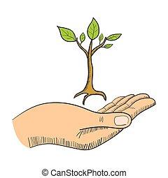 semente, dar, mão