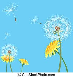 sementes, dandelion