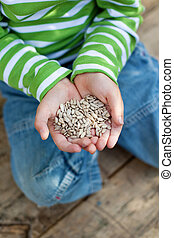sementes girassol, em, pequeno, meninos, mãos