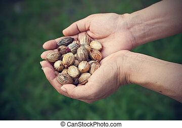 sementes, grãos, mãos