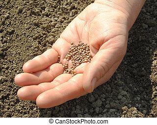 sementes, mão