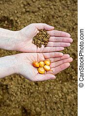 sementes, mãos