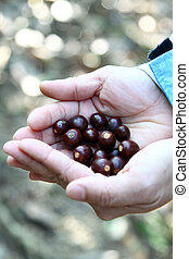 sementes, mãos humanas
