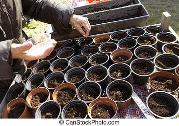 sementes, recipientes, porca, plástico