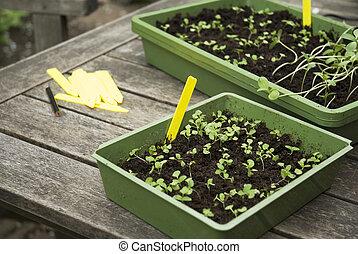 sementes, semear