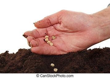 sementes, semear, mão