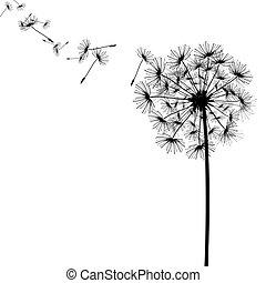 sementes, vento, dandelion