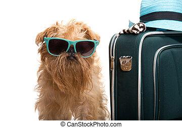 semester, för, hund