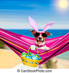 semester, påsk, hund