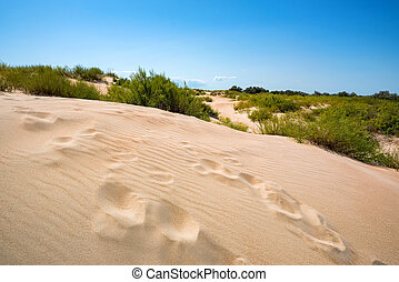 Semi-desert landscape with traces on sand on sunny day - ...