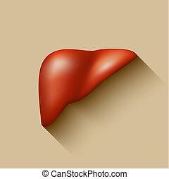 Semi-realistic vector human liver flat long shadow design