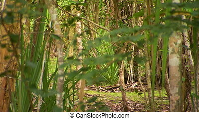 Semi-Thick Forest Area - Steady, medium close up shot of...