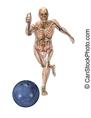 Semi-transparent Muscles over Skeleton - Bowling