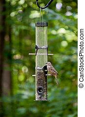 semilla, comida, alimentador del pájaro