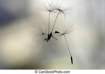semillas, aire