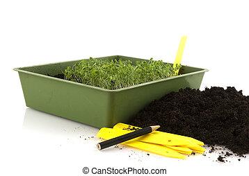 semillas, siembra