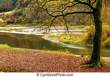 Semois river in autumn - Autumn view on a curve in the river...