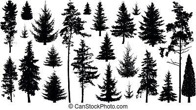 sempre-viva, coniferous, jogo, silueta, abeto, árvores., pine-tree, árvores, isolado, árvore pinho, pinho, cedro, experiência., fir-tree, cobrança, branca, scotch, natal, floresta