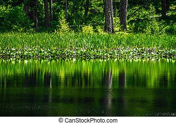 sempre-viva, refletir, floresta lago