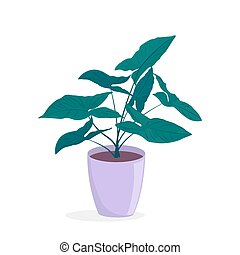 sempreverde, pianta, casa, vaso, deciduo, philodendron.