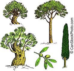 sempreverde, pietra, set, illustrazione, inciso, cipresso, isolato, albero, simboli, vettore, pino, pinea, oliva, disegnato, mano, sud, italiano