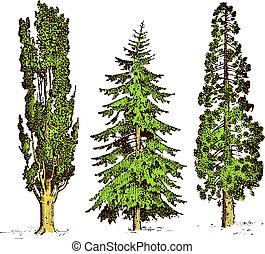 sempreverde, pietra, set, illustrazione, inciso, cipresso, isolato, albero, simboli, vettore, pino, pinea, disegnato, mano, sud, italiano