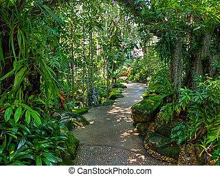 senda, no, jardín, gente, selva
