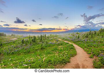 sendero de excursión, con, flores salvajes, y, sunset.,...