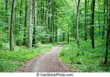 sendero de excursión, en, un, bosque verde
