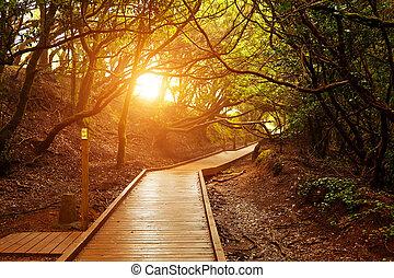 sendero, de, los, sentidos, anaga, parque nacional, tenerife