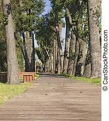 sendero de madera, beetwin, árboles, en el parque
