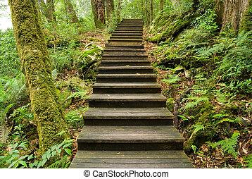 sendero de madera, en, el, bosque