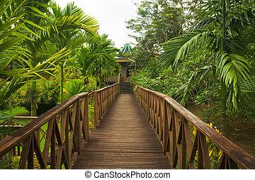 sendero de madera, selva, sepilok, borneo