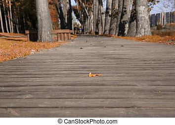 sendero, en, el, otoño, parque