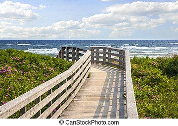 sendero, playa, océano