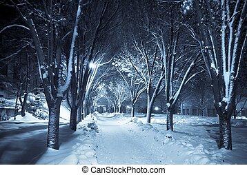 sendero, silencioso, nieve, debajo
